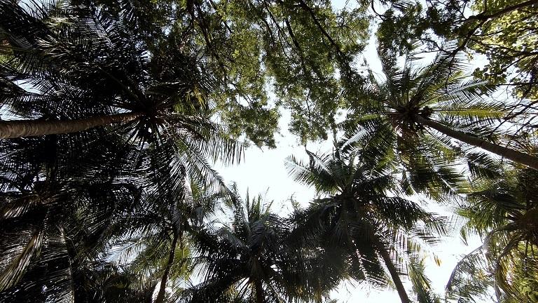 palmen-von-unten