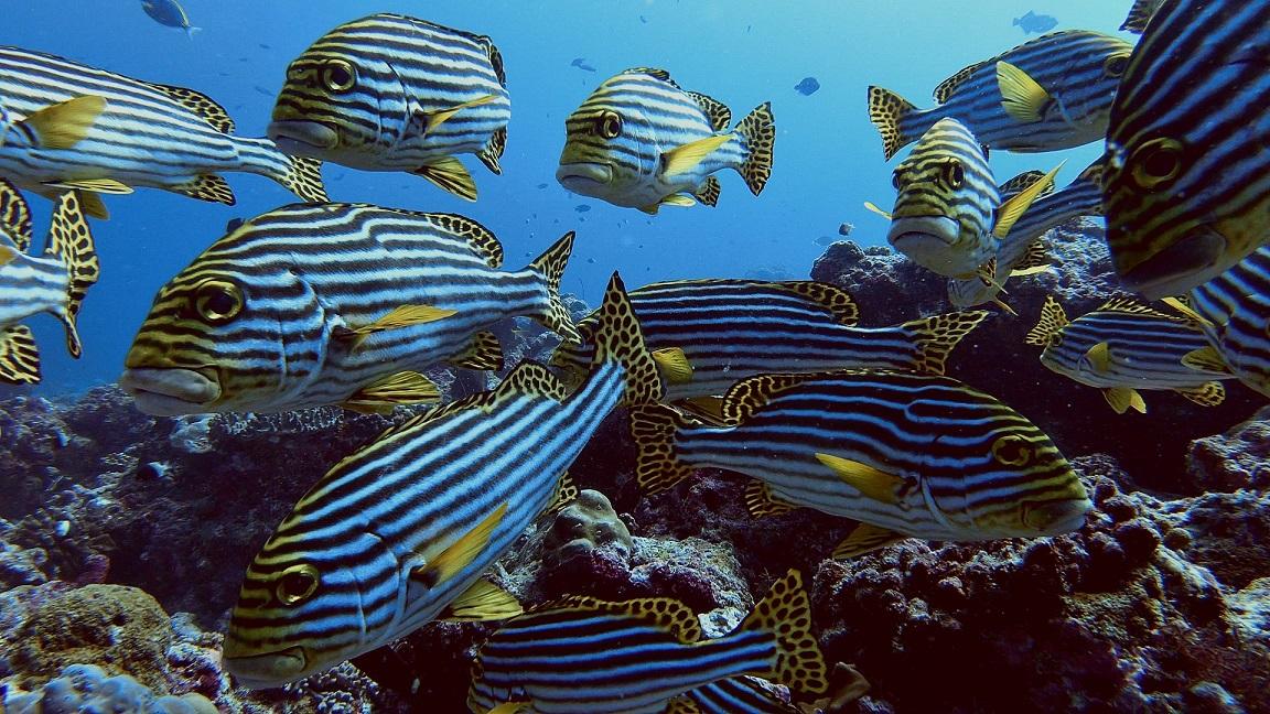 Malediven-süsslippen