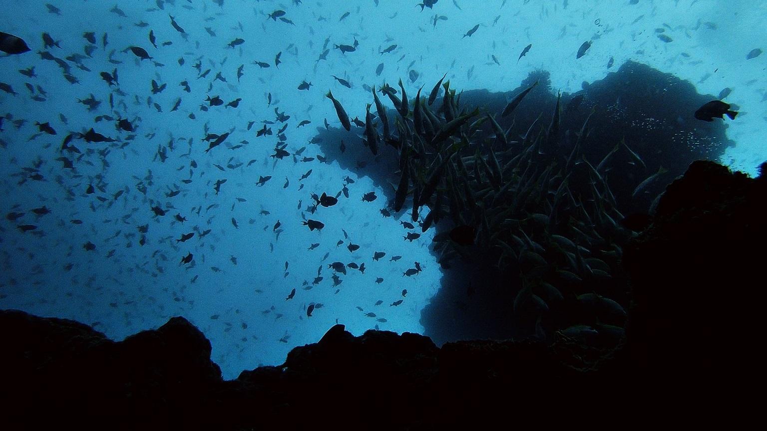 Malediven-tauchen-riff