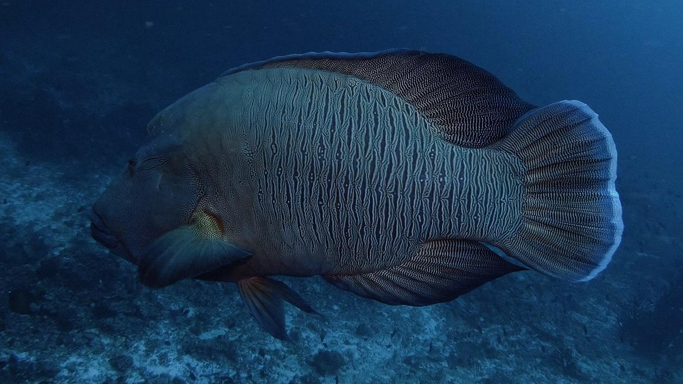 Malediven-tauchen-14
