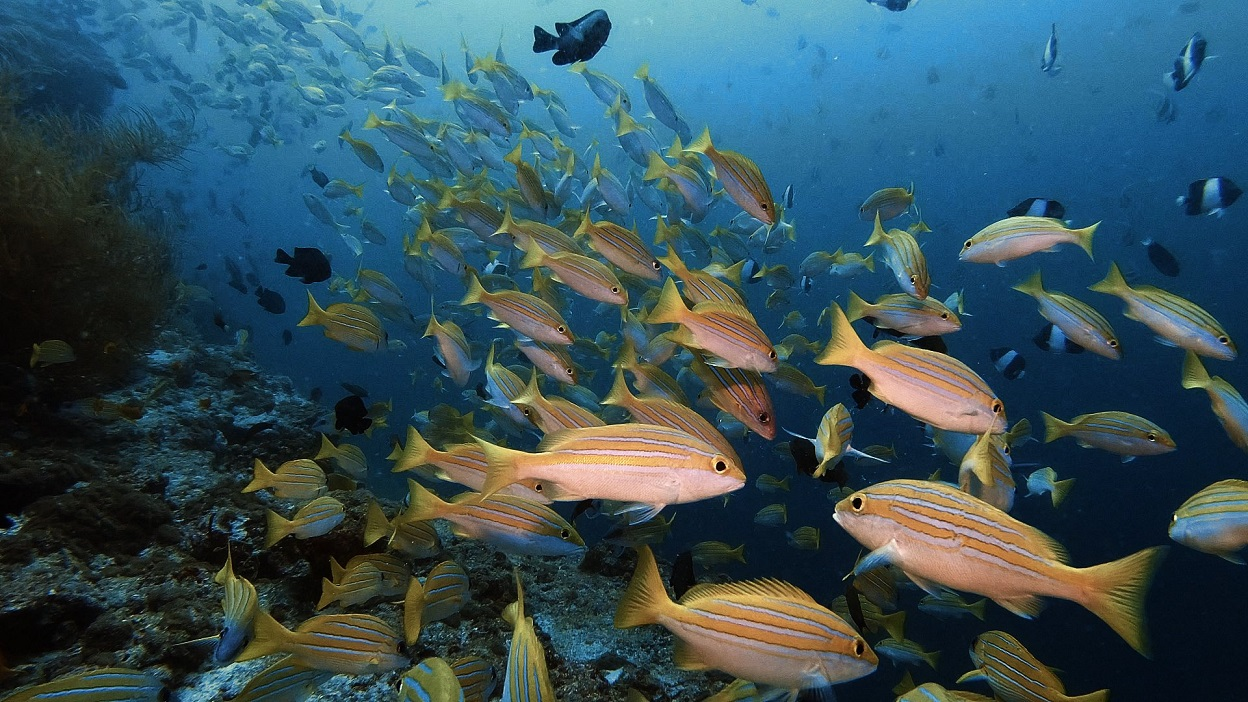Malediven-fischschwarm