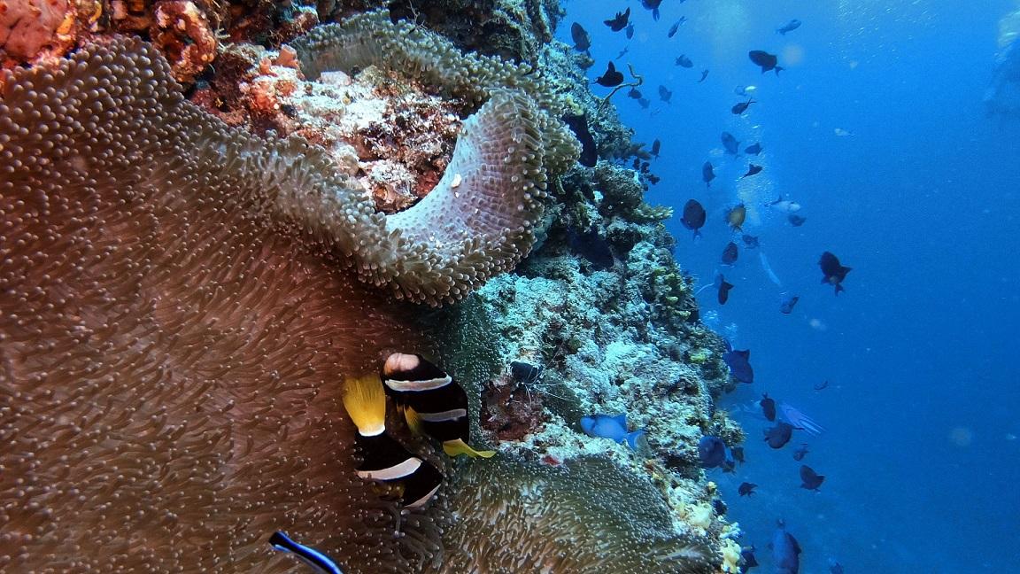 Malediven-ellaidhoo-hausriff