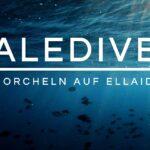 Schnorcheln auf den Malediven | Ellaidhoo | Hausriff