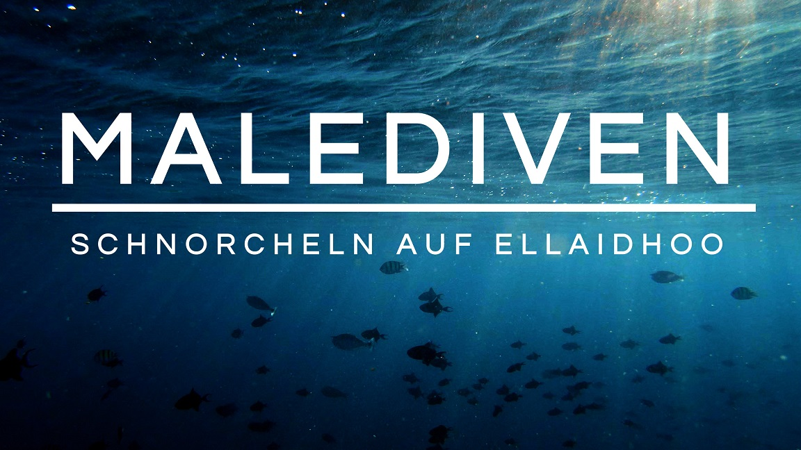 Read more about the article Schnorcheln auf den Malediven | Ellaidhoo | Hausriff