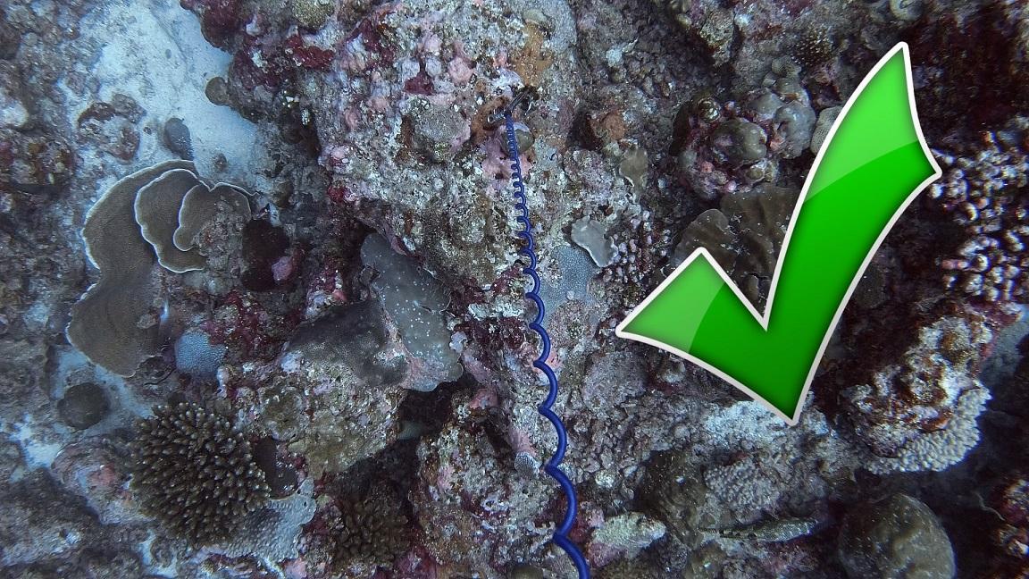Malediven-tauchen-riffhaken-2