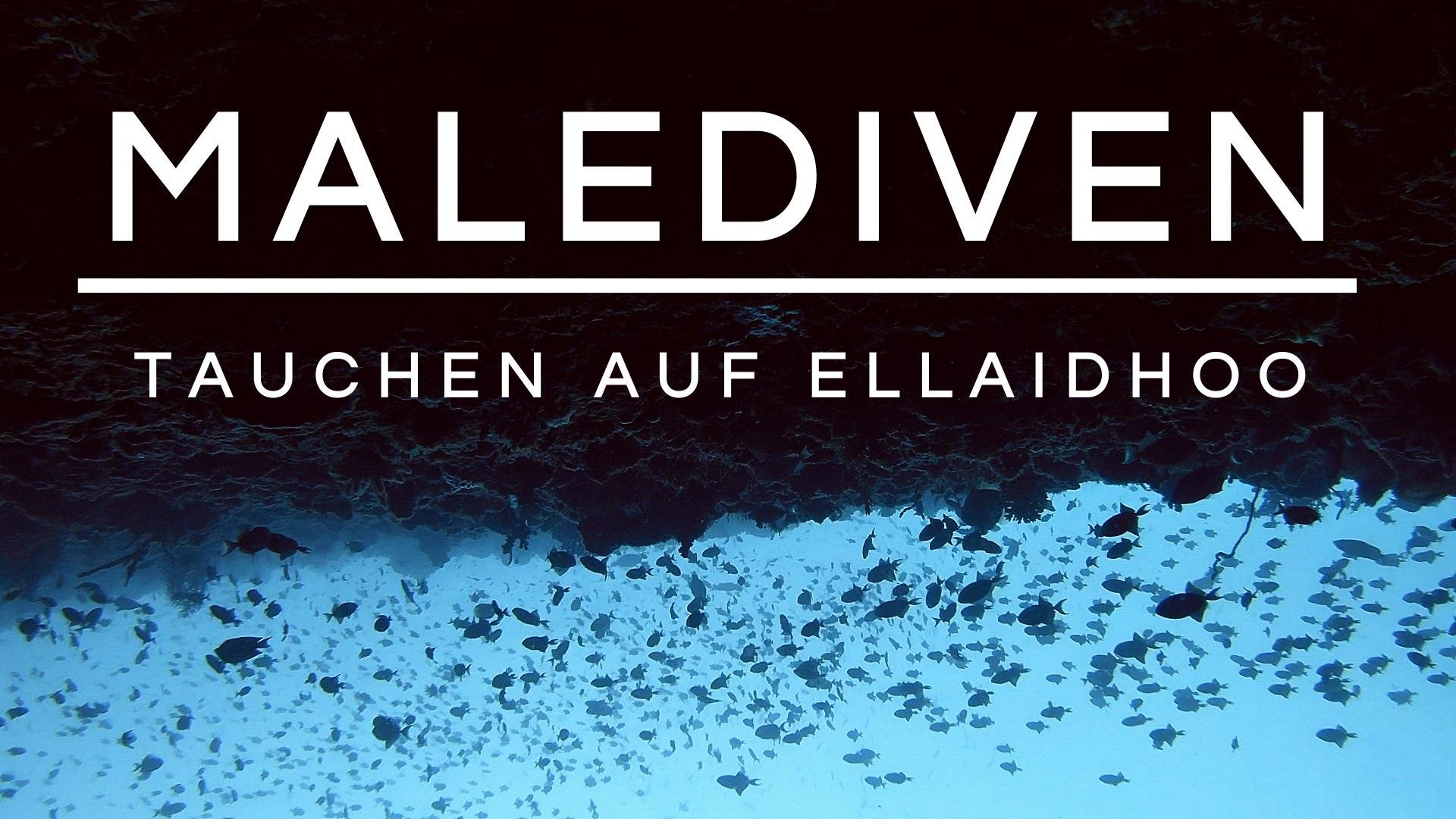 "You are currently viewing Tauchen auf den Malediven | ""Dive&Sail"" auf Ellaidhoo"