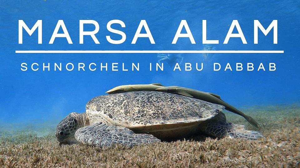 Read more about the article Schnorcheln in Ägypten | Marsa Alam | Abu Dabbab
