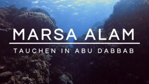 Read more about the article Tauchen in Ägypten | Marsa Alam | Abu Dabbab