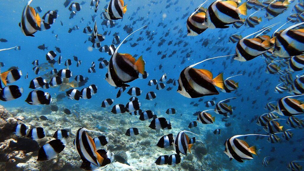 malediven-fische