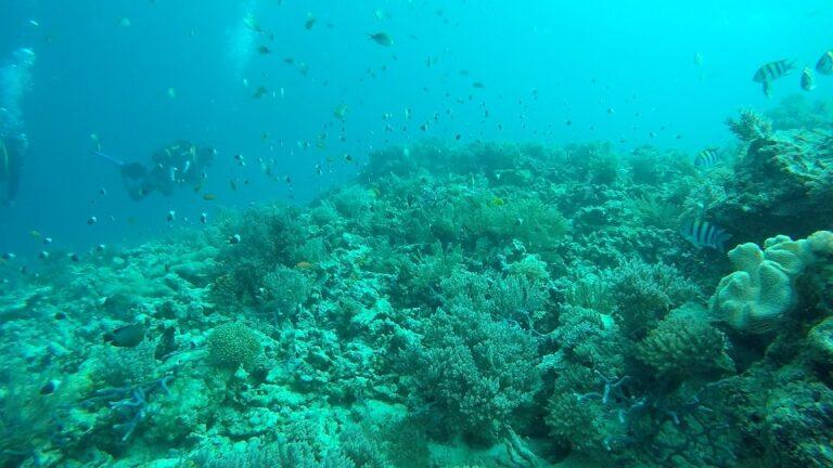 ohne-rotfilter-unterwasseraufnahmen-gopro