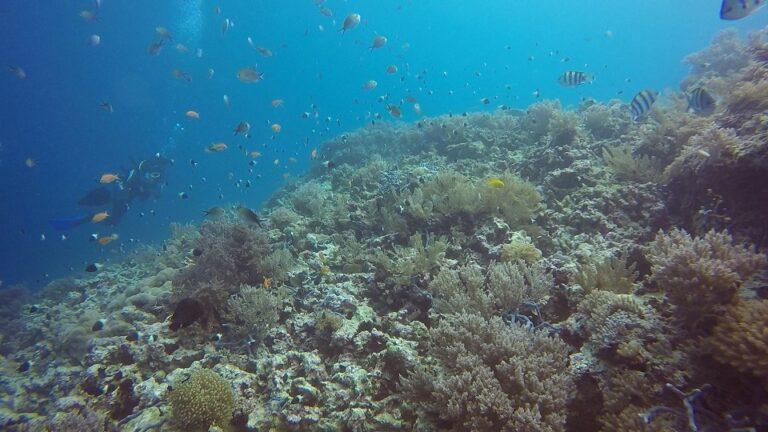 rotfilter-unterwasseraufnahmen-gopro
