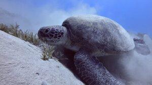 schildkröte-2